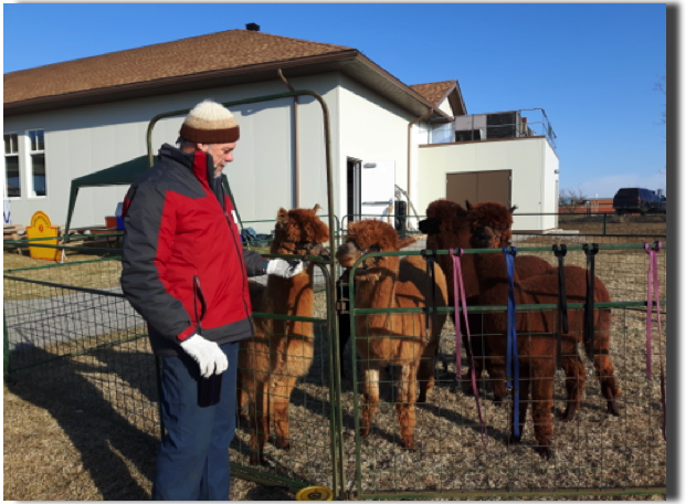 Henry Mengers from Andre's Alpacas shows some of his prize Alpaca's